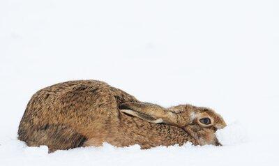Un gros pull ou une fourrure d'hiver?