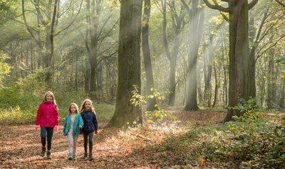 Des promenades nature qui font du bien