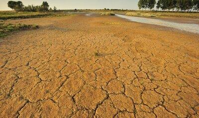 Toujours plus sec : la Belgique se transforme-t-elle progressivement en désert ?
