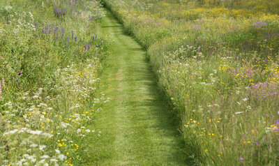 Aidez votre jardin à gérer les étés chauds et secs