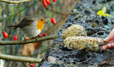 Beignets aux pommes et petits pains faits maison pour les oiseaux du jardin