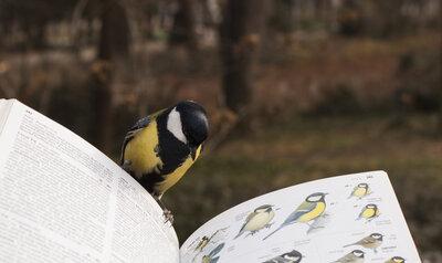 Les oiseaux pensent-ils comme les humains ?