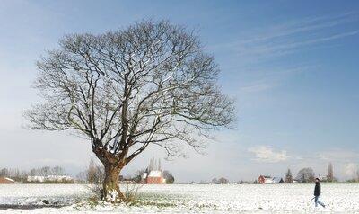 Quels arbres ont déjà leurs feuilles ?
