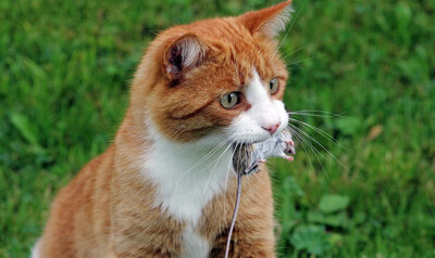Votre chat chassera moins grâce à ces astuces