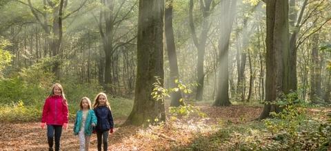 vilda-121693-wandelen-in-het-bos-jeroen-mentens-800-px-47146.jpg