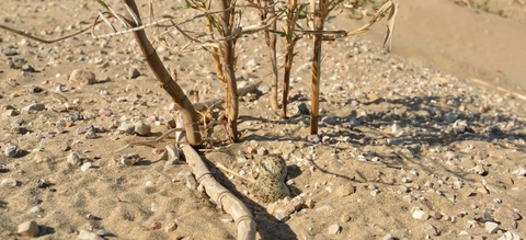 nestje-van-strandplevier-aangepast.jpg