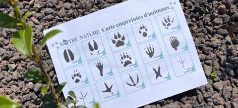 carte-empreintes-animaux.png