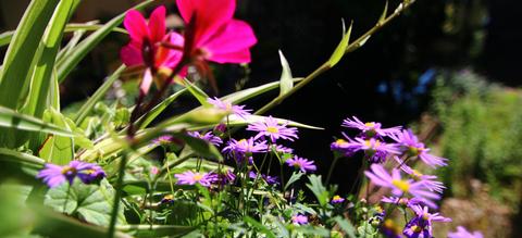 header-bloemen-brugge.jpg