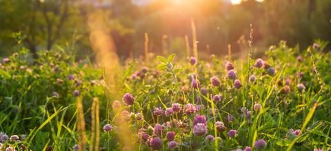 maai-mei-niet-tuin-met-wilde-bloemen.jpg