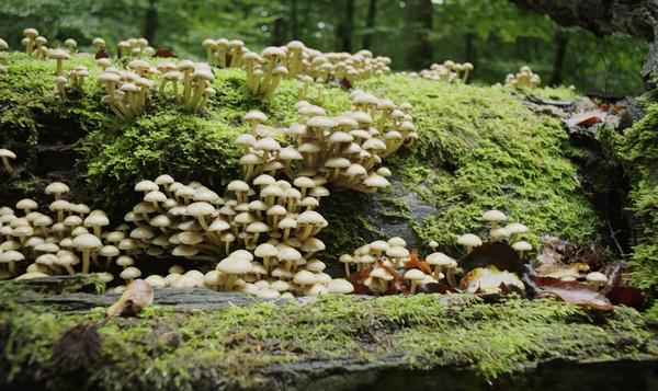 Dix mille champignons