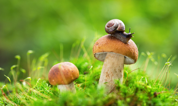 Balades en pleine nature à la découverte des champignons