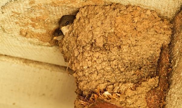 Quiz : les animaux et leurs nids