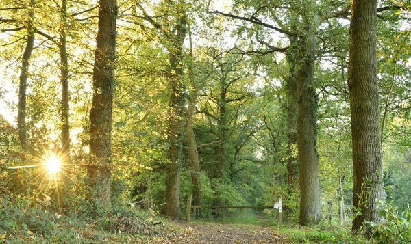 Les forêts résilientes, pour lutter contre les changements climatiques