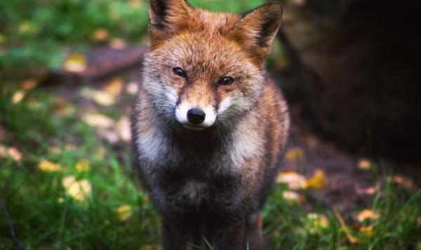 #ExplorezLaNature : Relevez le défi faune
