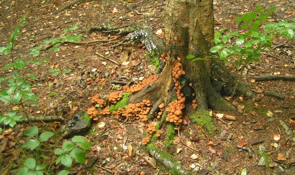 Notre Nature au pays des champignons