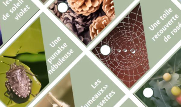 Essayez le bingo d'automne de Notre Nature !