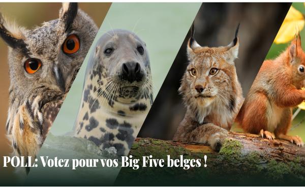 Votez pour vos Big Five belges !