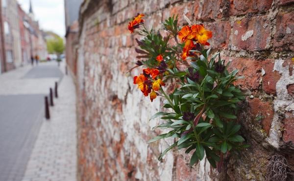 Défi flore n°5 : Cherchez 3 plantes grimpantes et observez-les avec votre loupe DIY