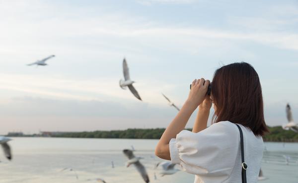 Défi faune n°5 : Identifiez 6 oiseaux