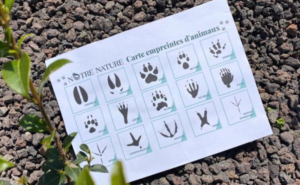 Défi faune n°3 : A la recherche de traces d'animaux