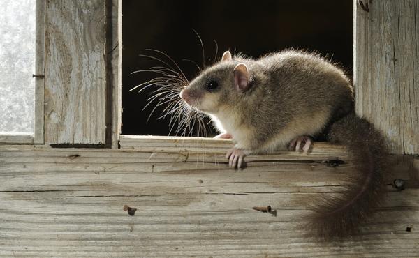 Défi nocturne #2 : repérez des petits mammifères avec votre piège à empreintes DIY