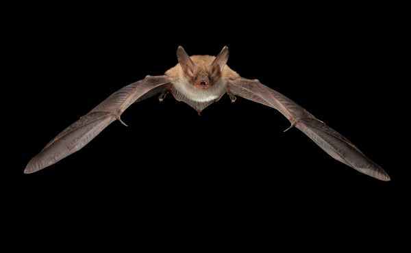 Défi nocturne #5 : jouez avec une chauve-souris