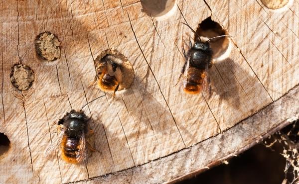 A la rescousse n°4 : Créez un refuge pour les insectes