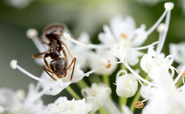 A la rescousse n°2 : Un bistro pour insectes