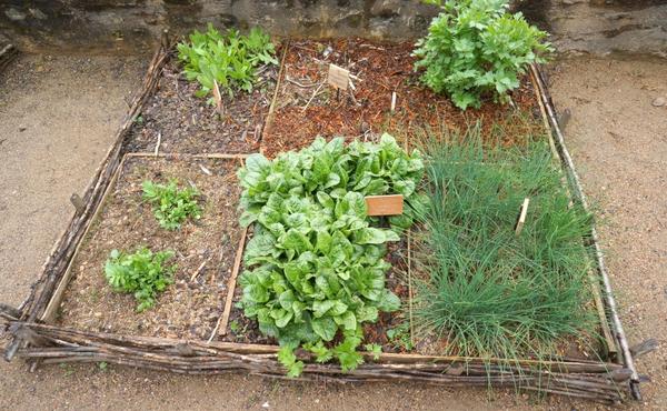Créez un potager ou un jardin collectif