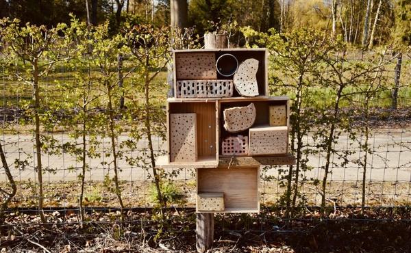 Construisez un hôtel à insectes et/ou un nichoir