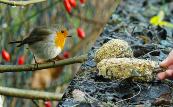 Concoctez des friandises pour les oiseaux en hiver
