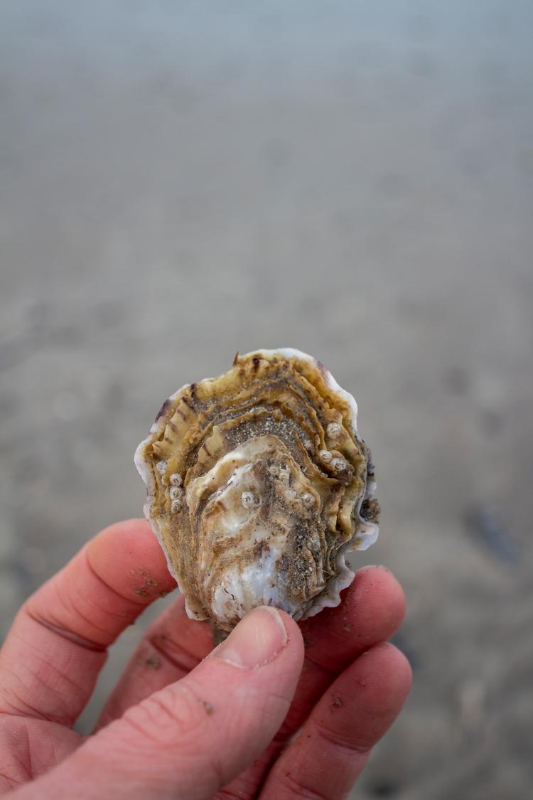 oester2.jpg