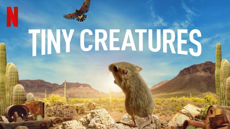 tiny-creatures-wide.jpg