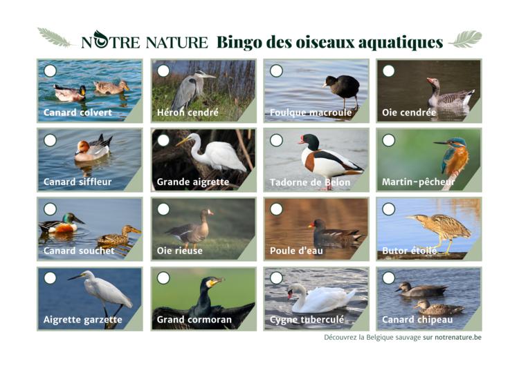 bindo-des-oiseaux-aquatiques.png