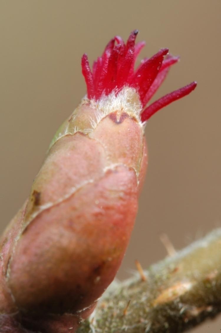 vilda-8186-bloempje-van-de-hazelaar-rollin-verlinde-800-px-50831.jpg