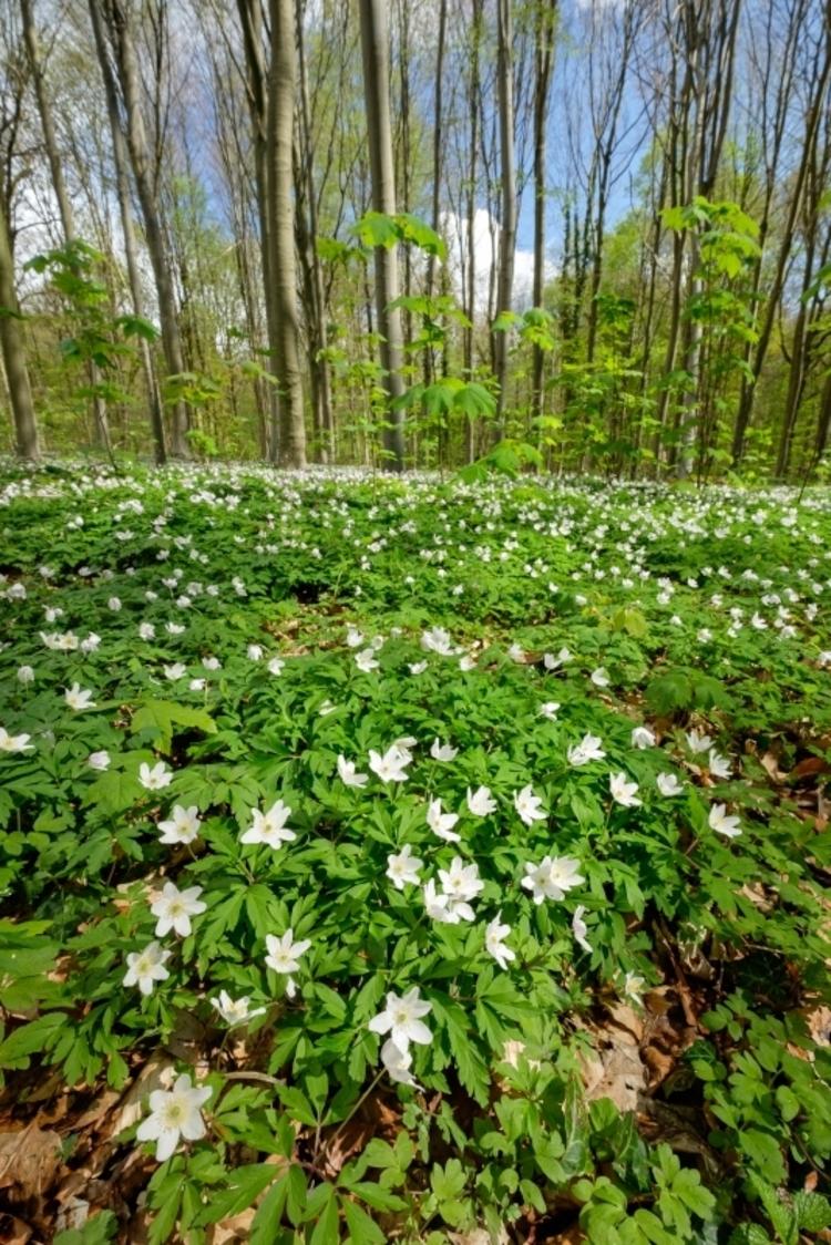 vilda-109778-voorjaarsflora-jeroen-mentens-800-px-51174.jpg