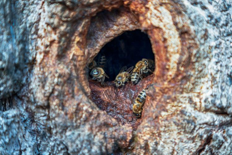 hout-bijen.jpg