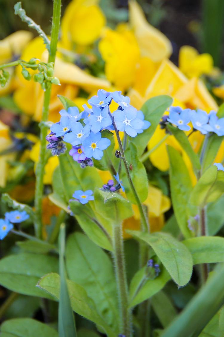 tuin-met-bloemen.jpg