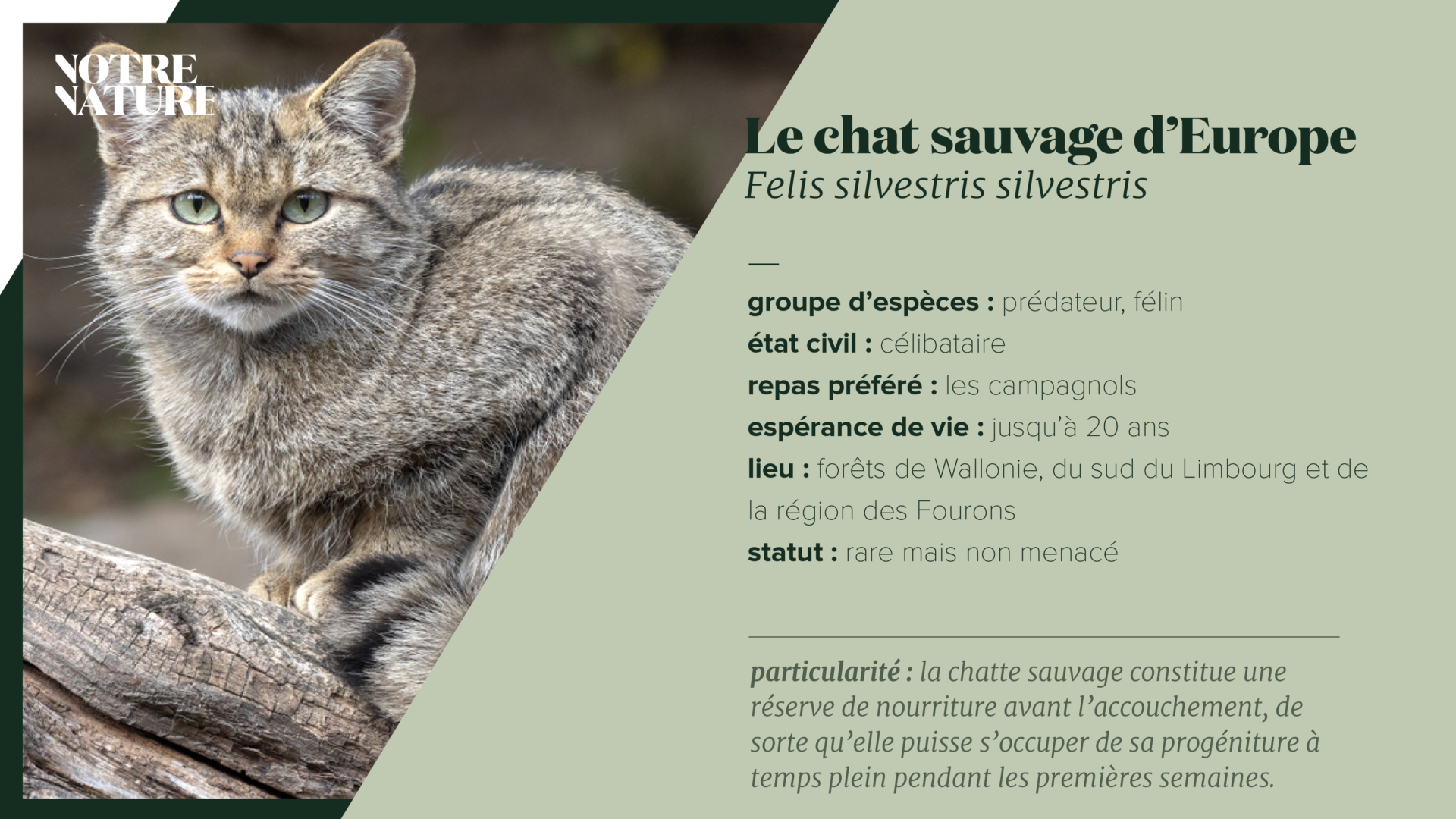 on-fiche-wilde-kat-fr.png