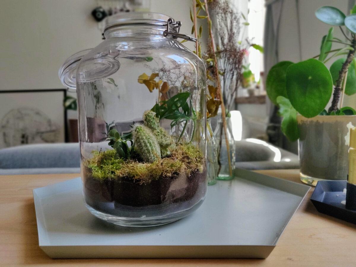 Fabriquez Votre Propre Terrarium Vegetal