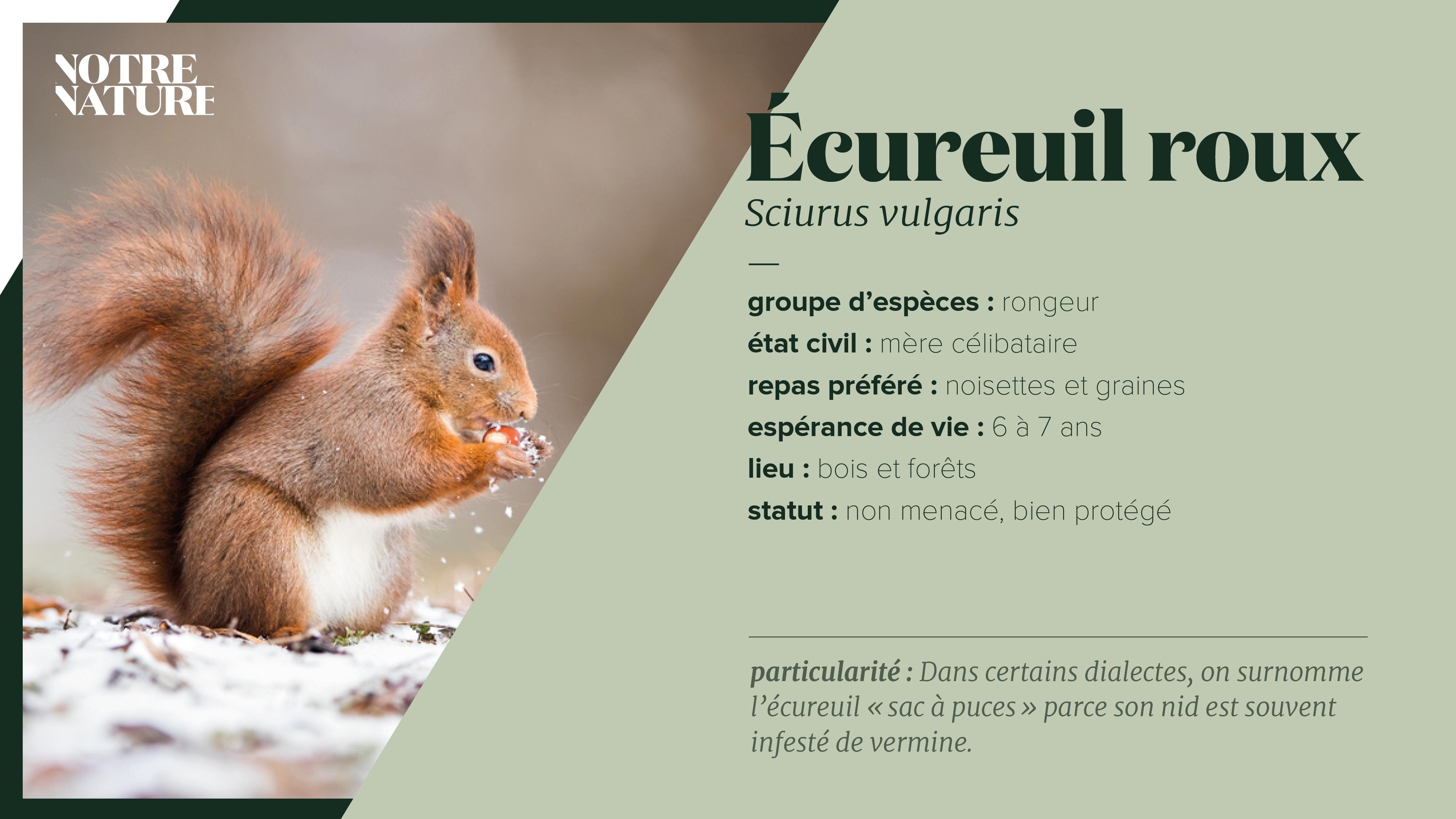 on-fiche-eekhoorn-fr.png
