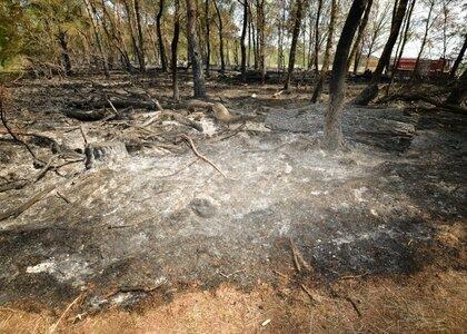 Voici à quoi ressemblait la zone naturelle de Liereman juste après l'extinction du feu.