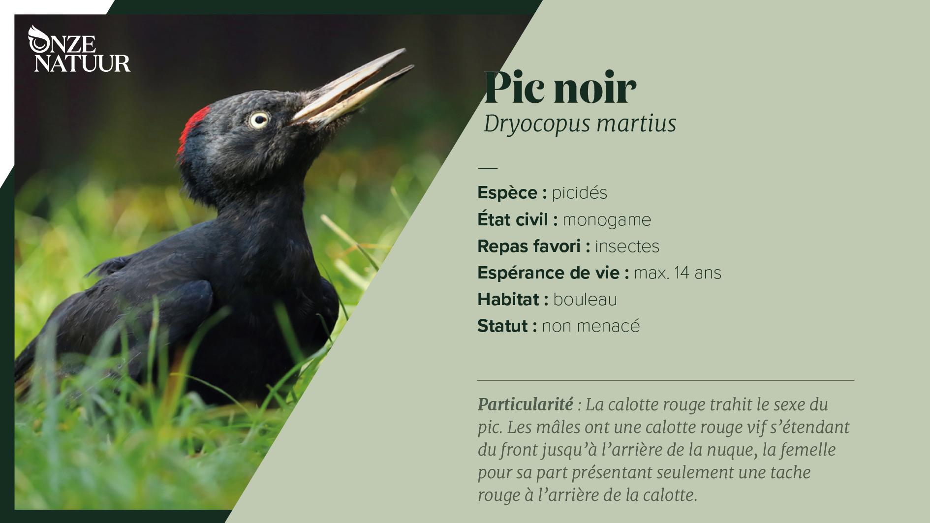 on-fiche-zwarte-specht-fr.png