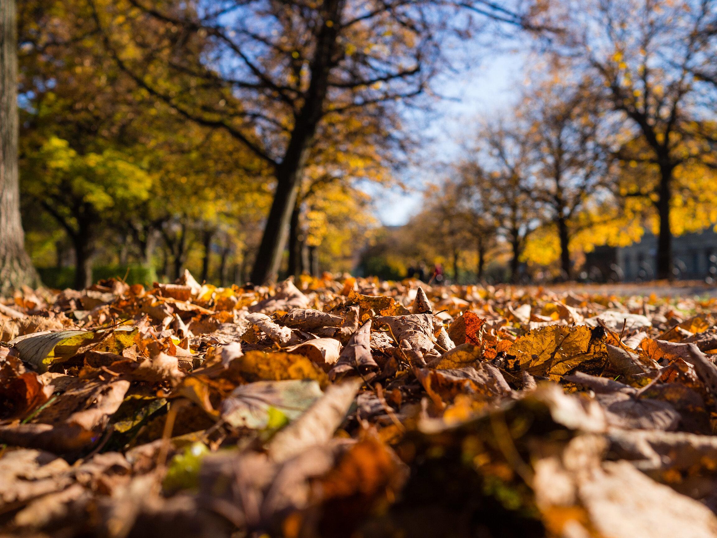 herfst-vallende-bladeren-onze-natuur.jpg