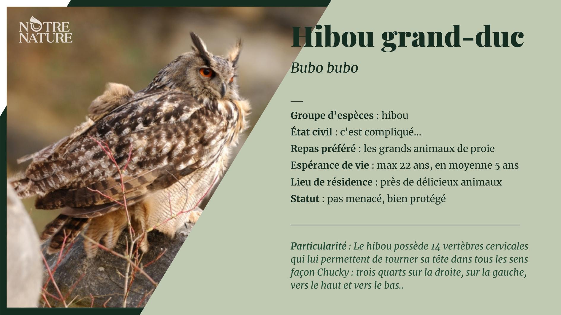 fiche-hibou-grand-duc-fr.png
