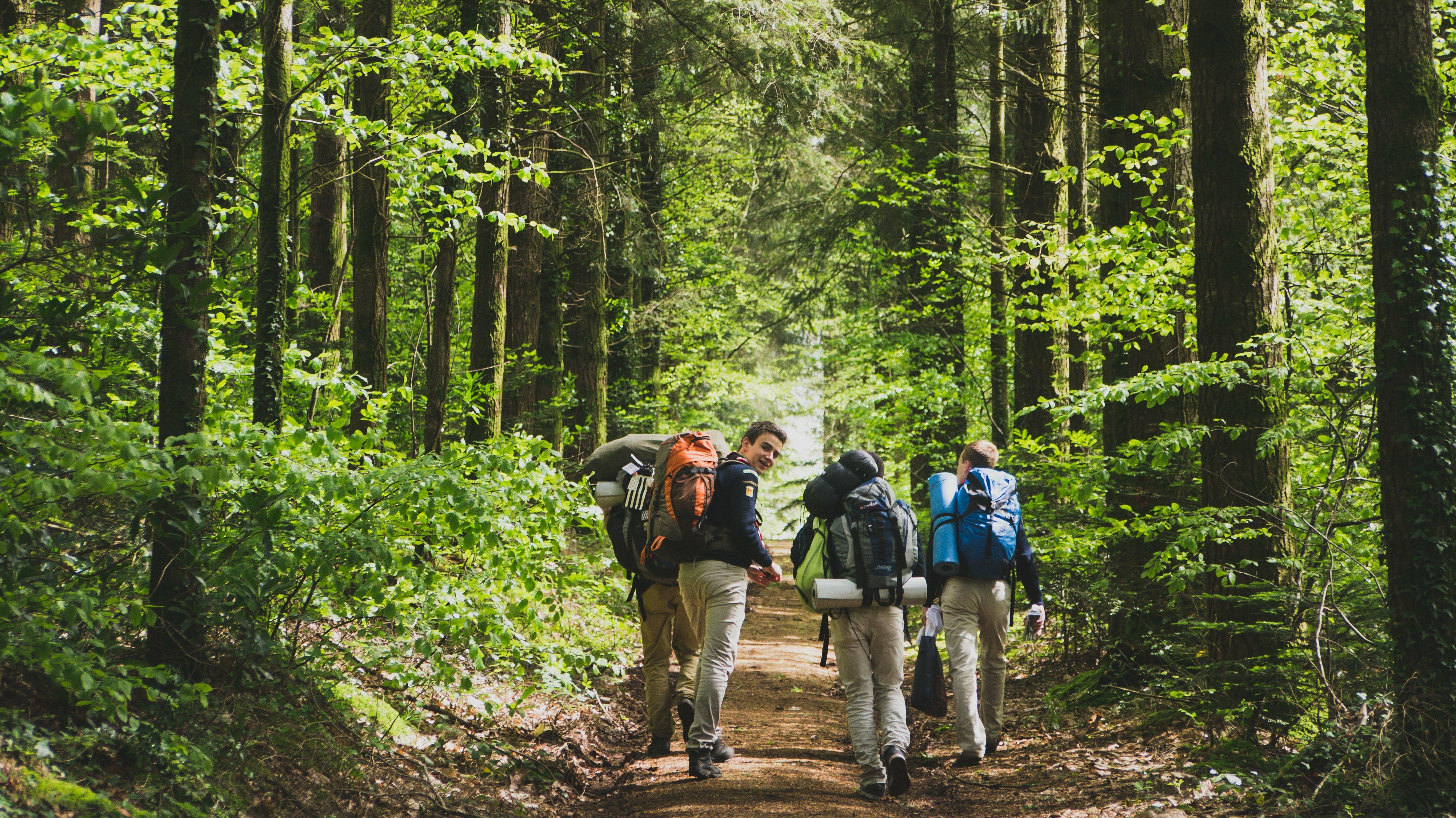 Scouts en forêt