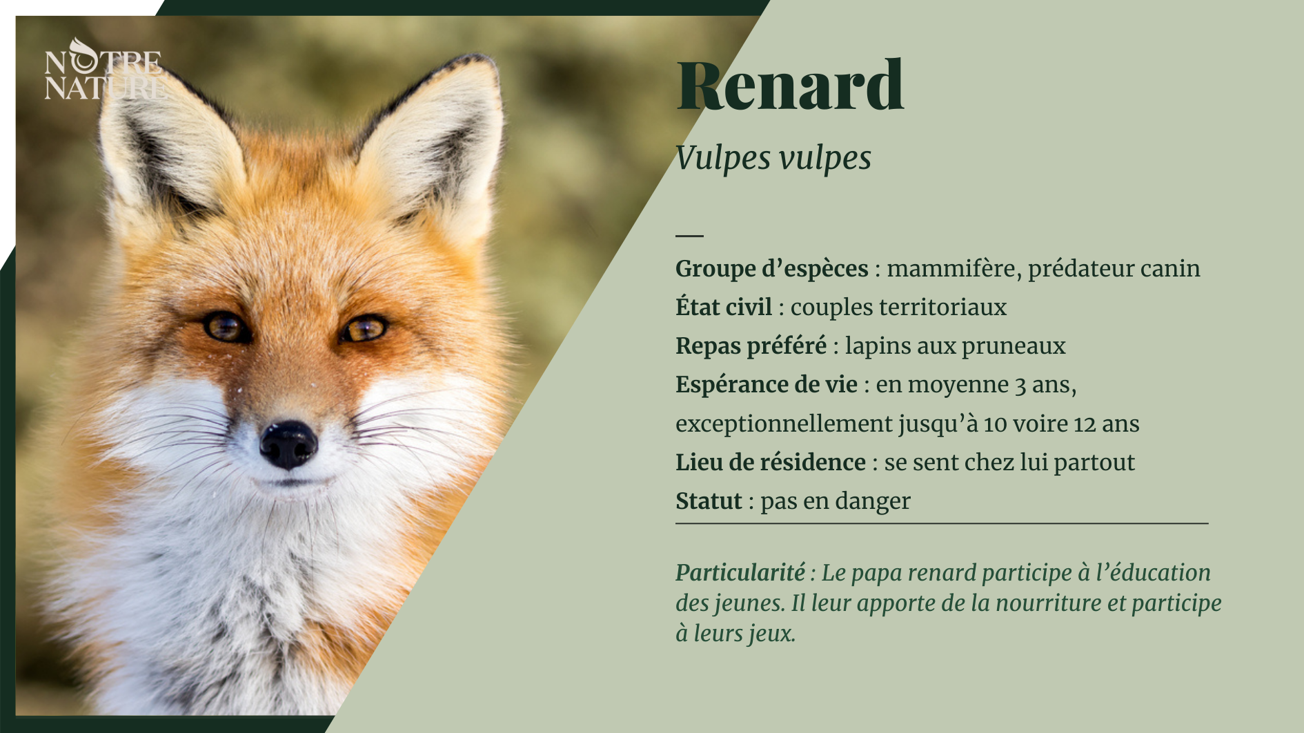 renard-fr.png