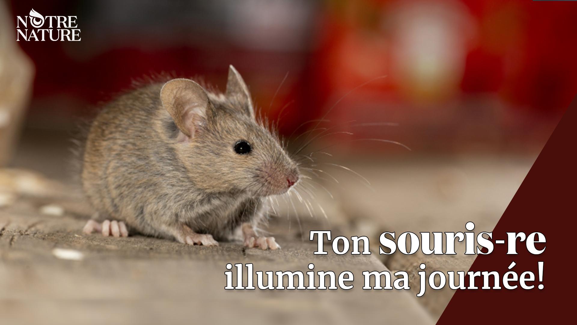 notre-nature-souris.png