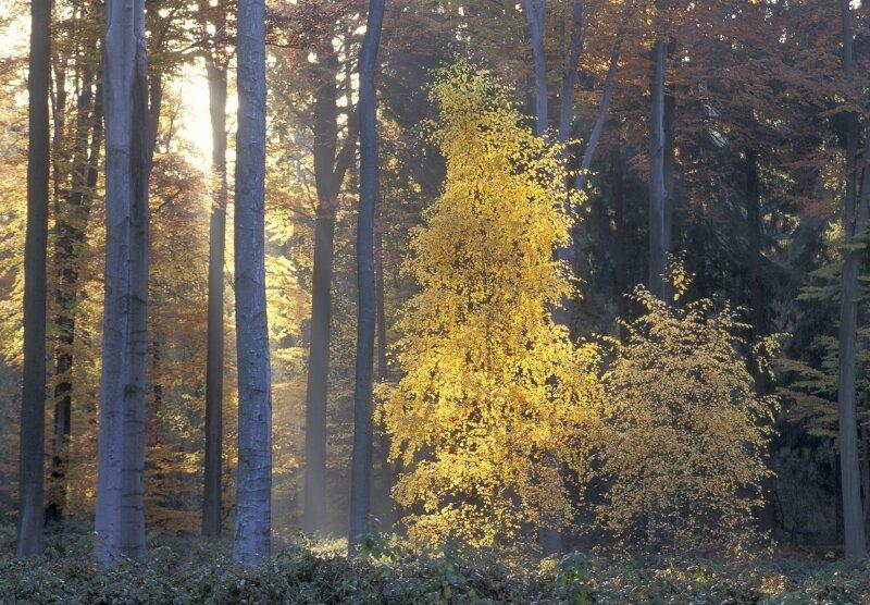 vilda-1770-herfstig-zonin-rollin-verlinde-800-px-51213.jpg