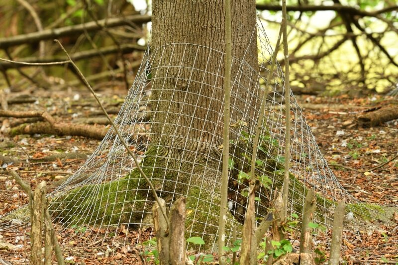 Grillage de protection contre les castors